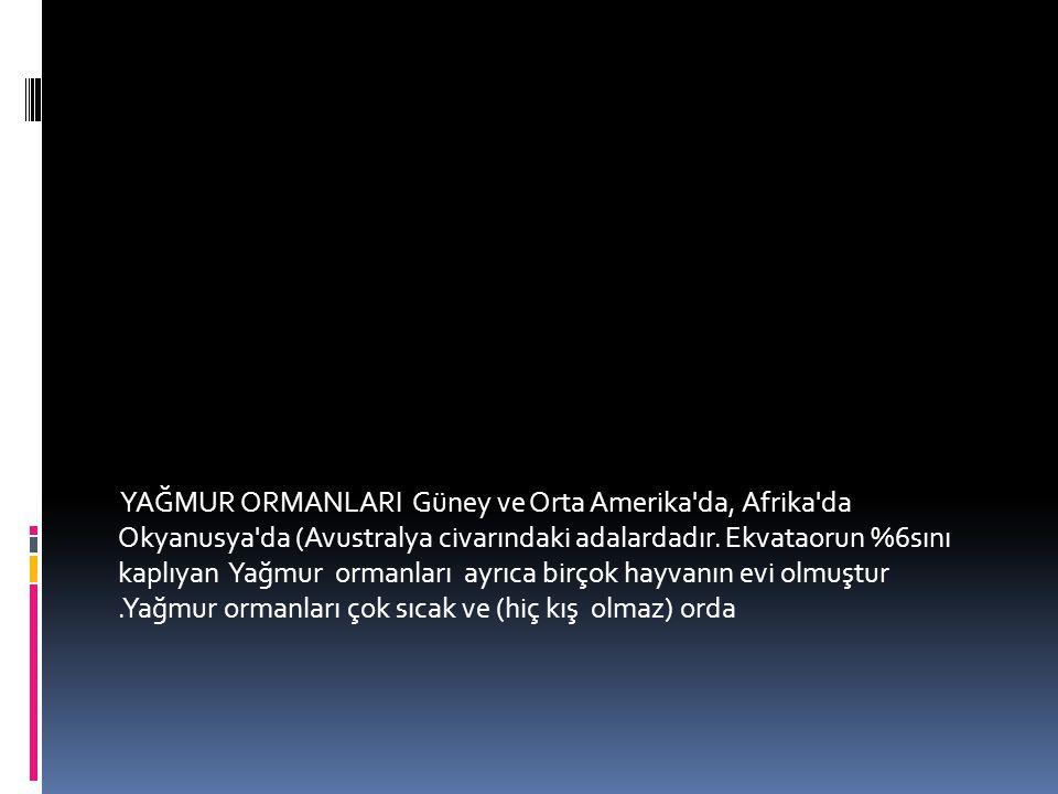 YAĞMUR ORMANLARI Güney ve Orta Amerika da, Afrika da Okyanusya da (Avustralya civarındaki adalardadır.