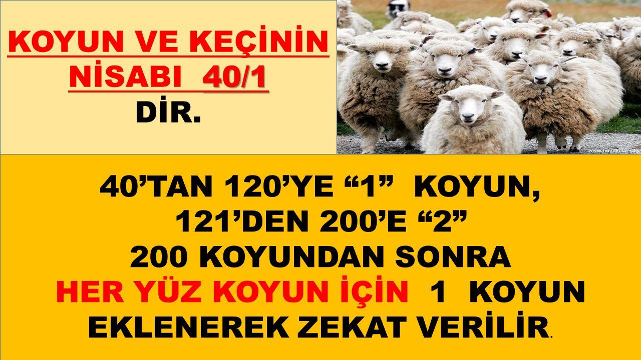 KOYUN VE KEÇİNİN NİSABI 40/1 DİR.