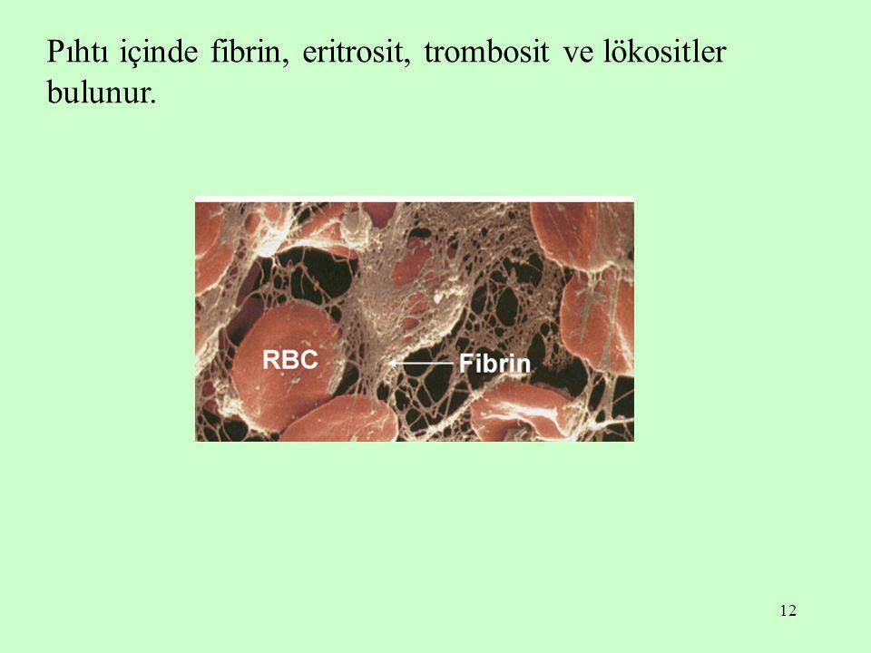 Pıhtı içinde fibrin, eritrosit, trombosit ve lökositler bulunur.