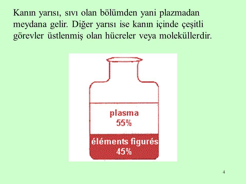 Kanın yarısı, sıvı olan bölümden yani plazmadan meydana gelir