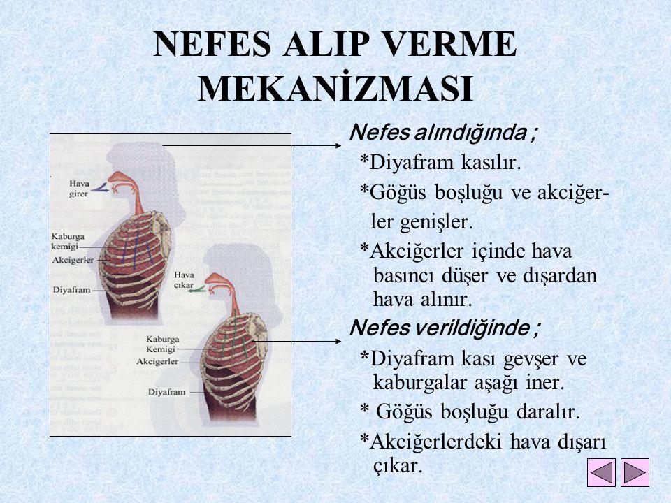 NEFES ALIP VERME MEKANİZMASI