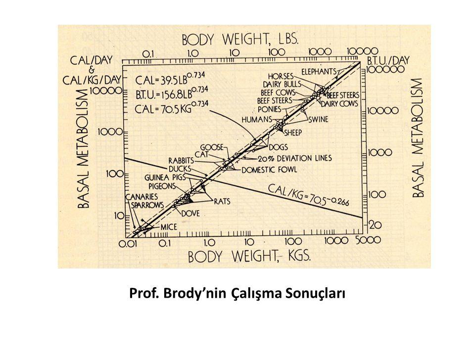 Prof. Brody'nin Çalışma Sonuçları