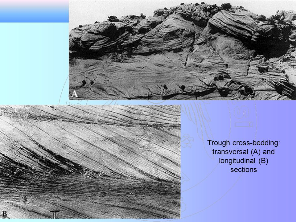 Trough cross-bedding: transversal (A) and longitudinal (B) sections