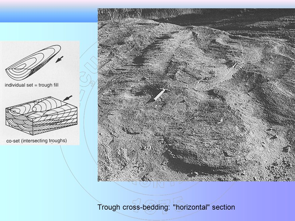 Trough cross-bedding: horizontal section
