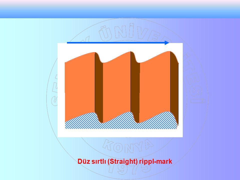 Düz sırtlı (Straight) rippl-mark