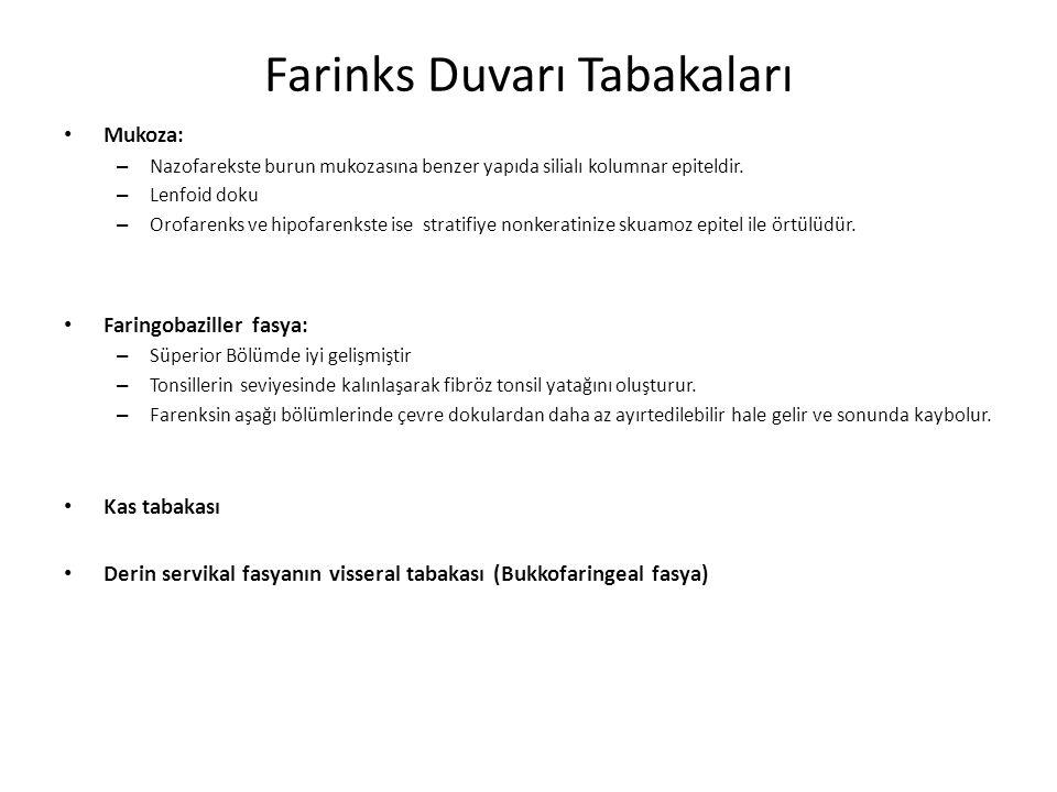 Farinks Duvarı Tabakaları