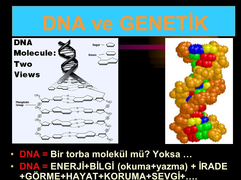 DNA ve GENETİK DNA = Bir torba molekül mü Yoksa …
