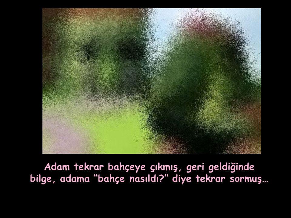 Adam tekrar bahçeye çıkmış, geri geldiğinde bilge, adama bahçe nasıldı diye tekrar sormuş…