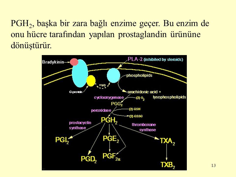 PGH2, başka bir zara bağlı enzime geçer