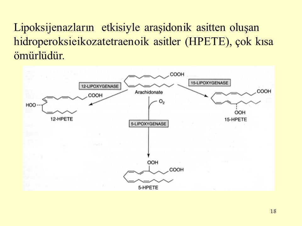 Lipoksijenazların etkisiyle araşidonik asitten oluşan hidroperoksieikozatetraenoik asitler (HPETE), çok kısa ömürlüdür.