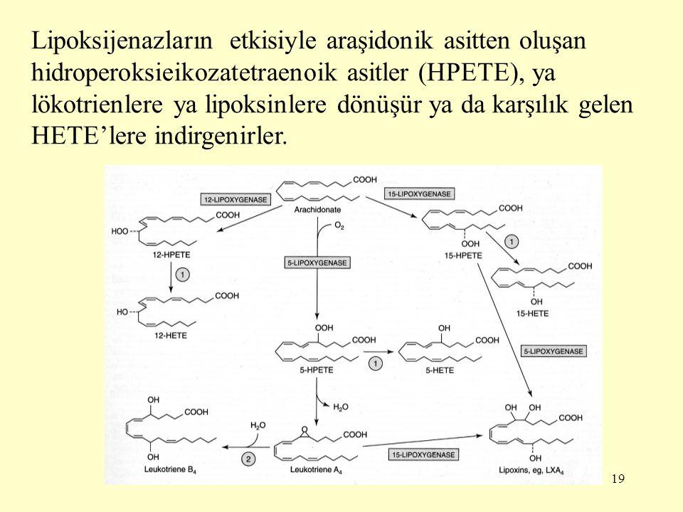 Lipoksijenazların etkisiyle araşidonik asitten oluşan hidroperoksieikozatetraenoik asitler (HPETE), ya lökotrienlere ya lipoksinlere dönüşür ya da karşılık gelen HETE'lere indirgenirler.
