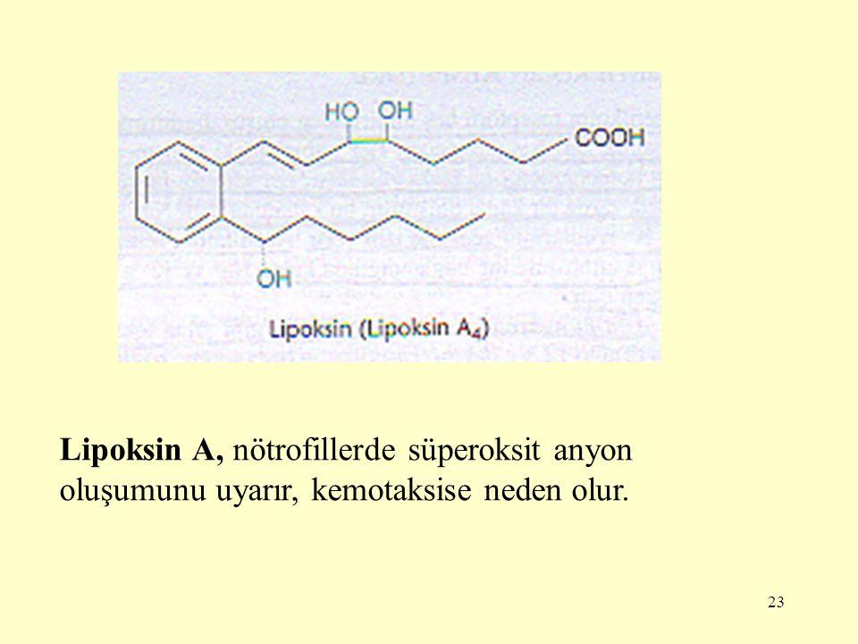 Lipoksin A, nötrofillerde süperoksit anyon oluşumunu uyarır, kemotaksise neden olur.