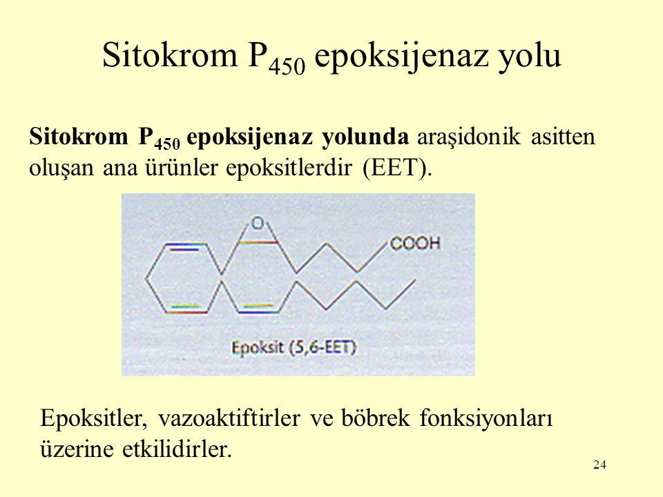 Sitokrom P450 epoksijenaz yolu
