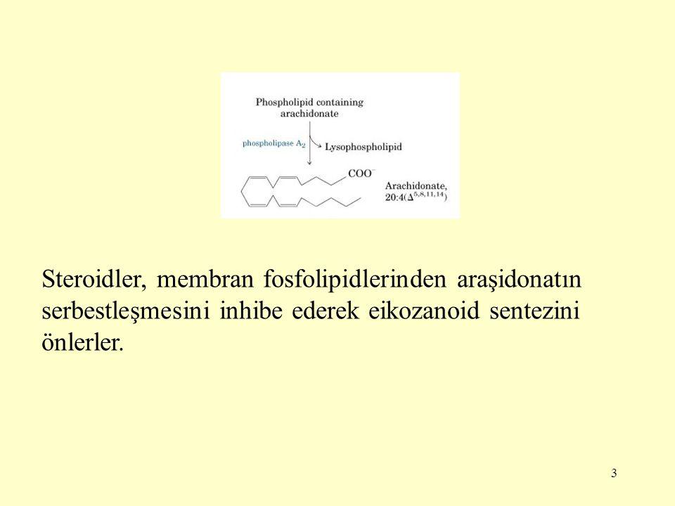 Steroidler, membran fosfolipidlerinden araşidonatın serbestleşmesini inhibe ederek eikozanoid sentezini önlerler.