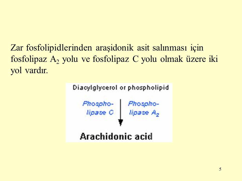 Zar fosfolipidlerinden araşidonik asit salınması için fosfolipaz A2 yolu ve fosfolipaz C yolu olmak üzere iki yol vardır.