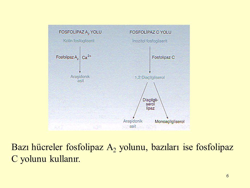 Bazı hücreler fosfolipaz A2 yolunu, bazıları ise fosfolipaz C yolunu kullanır.