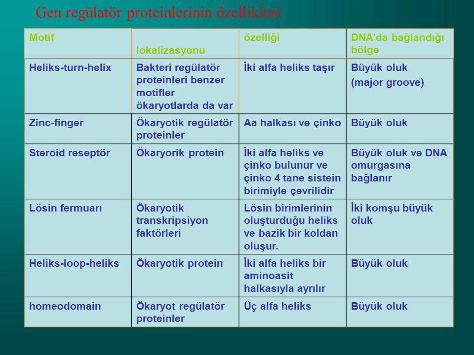 Gen regülatör proteinlerinin özellikleri