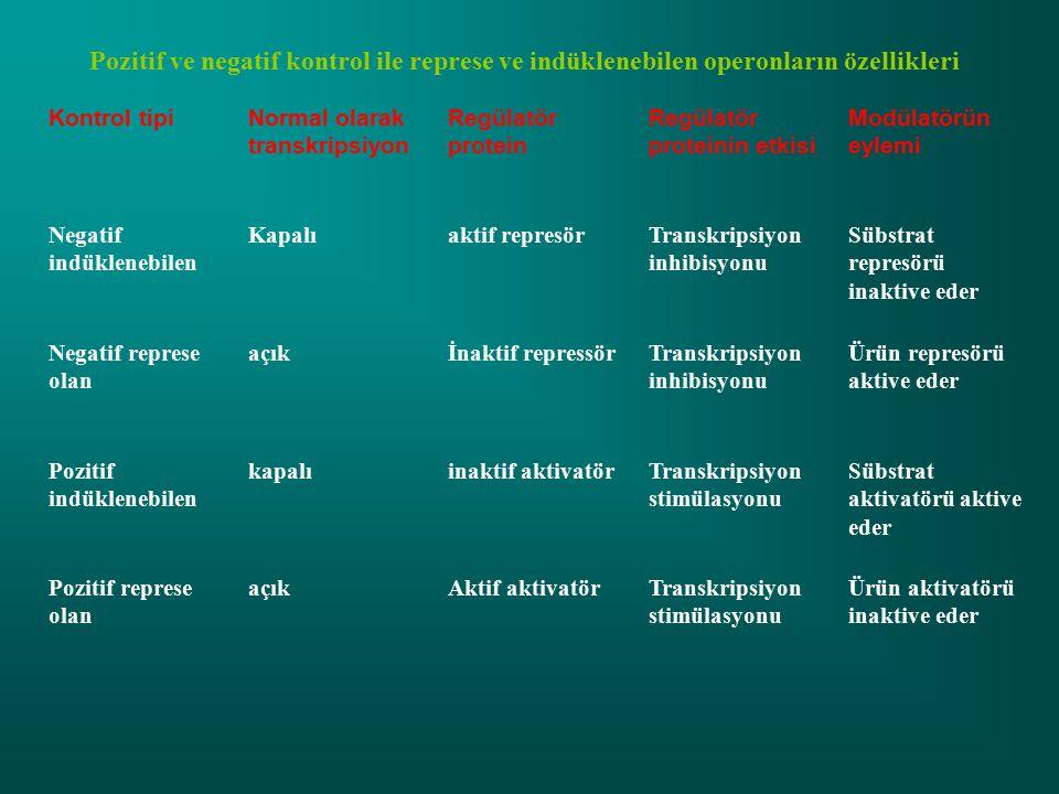 Pozitif ve negatif kontrol ile represe ve indüklenebilen operonların özellikleri