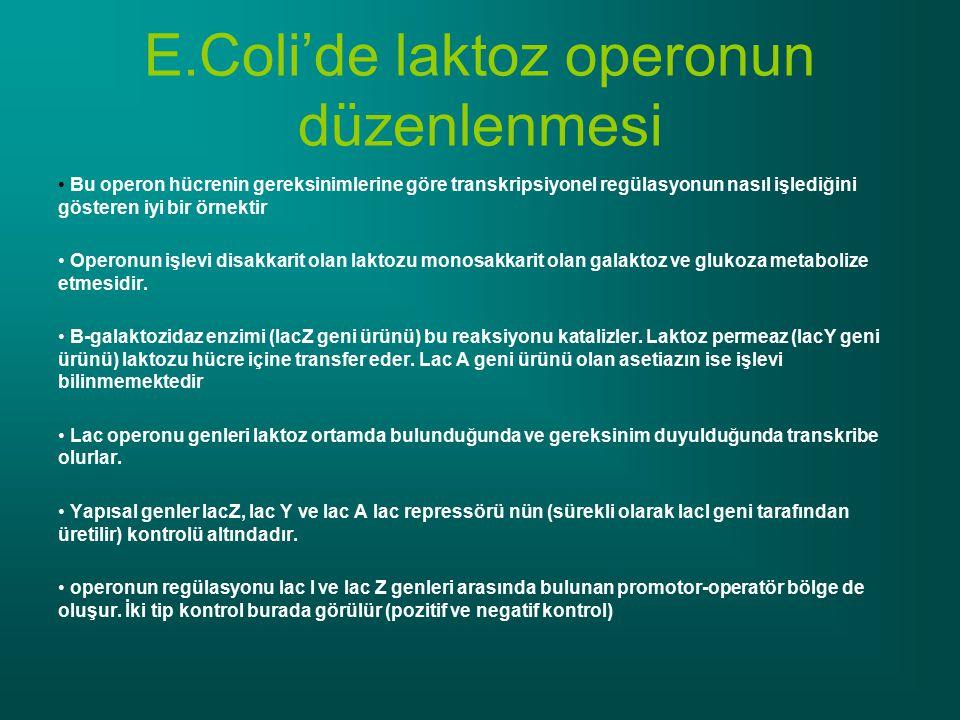 E.Coli'de laktoz operonun düzenlenmesi
