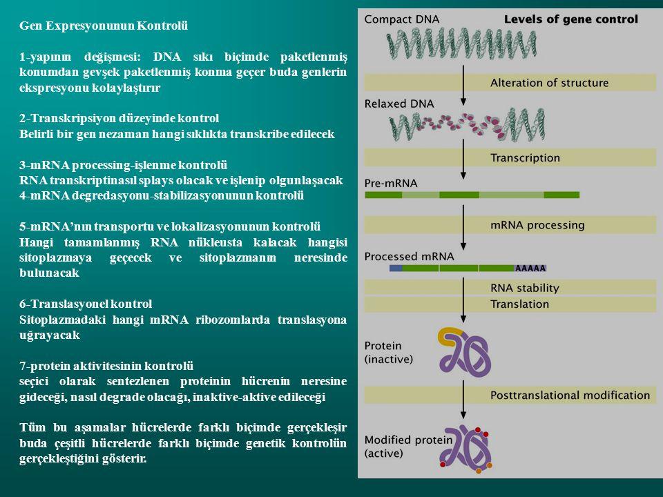 Gen Expresyonunun Kontrolü