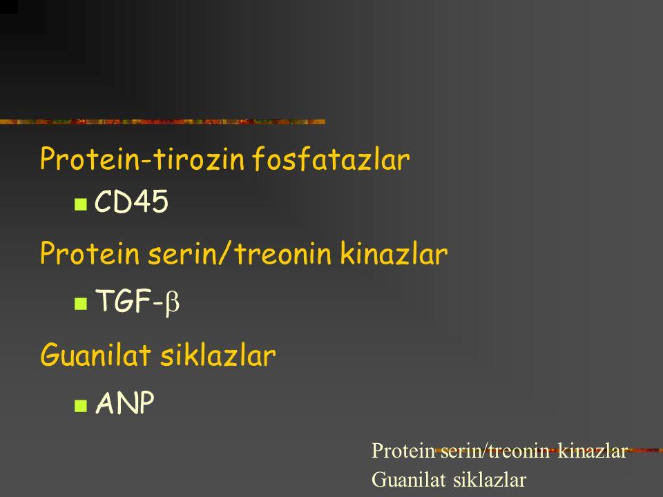 Protein-tirozin fosfatazlar CD45 Protein serin/treonin kinazlar TGF-