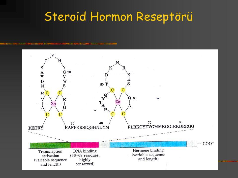 Steroid Hormon Reseptörü
