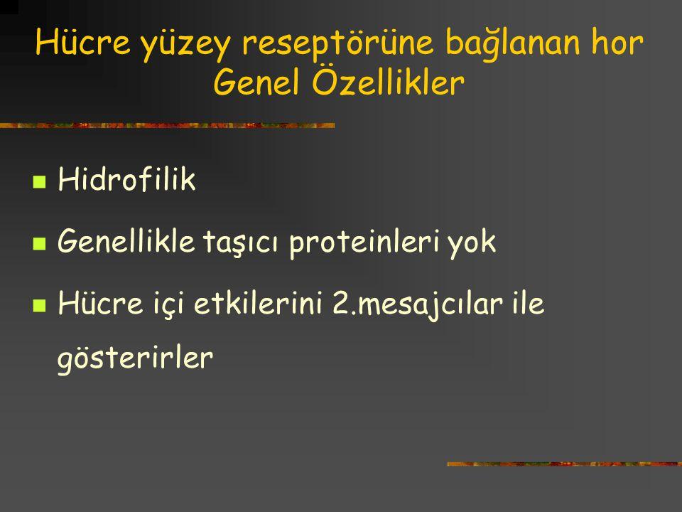 Hücre yüzey reseptörüne bağlanan hor Genel Özellikler