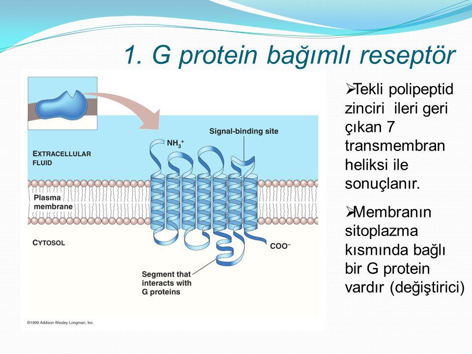 1. G protein bağımlı reseptör