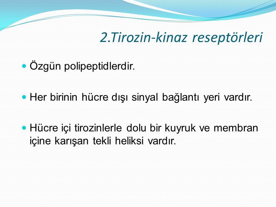 2.Tirozin-kinaz reseptörleri