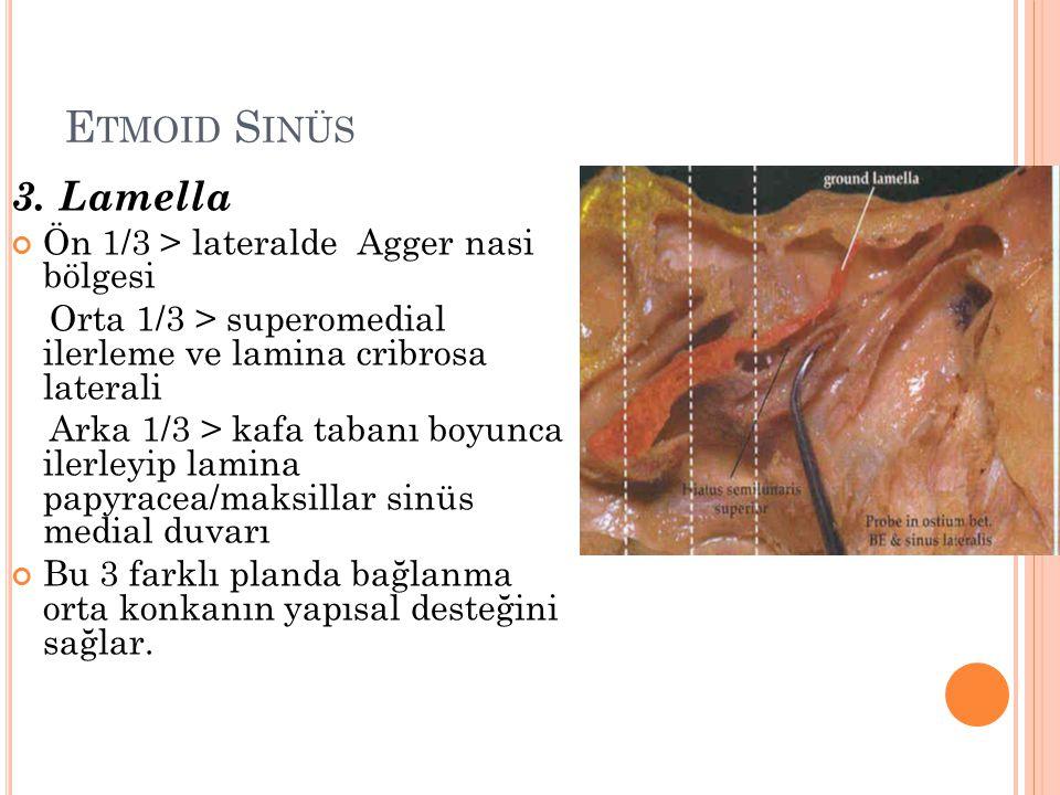 Etmoid Sinüs 3. Lamella Ön 1/3 > lateralde Agger nasi bölgesi