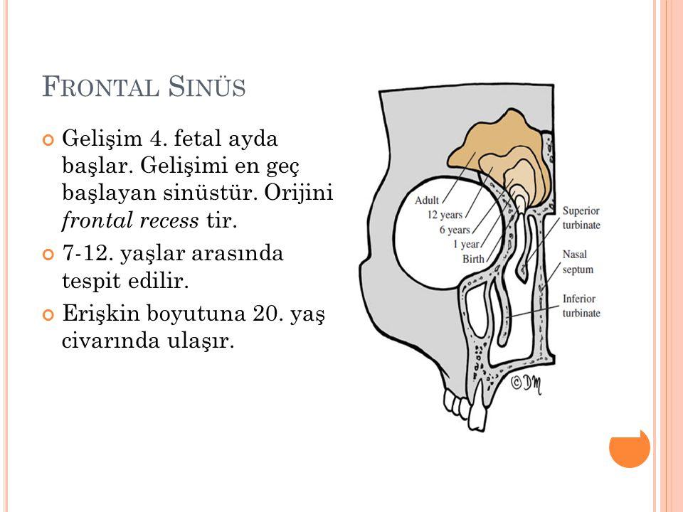 Frontal Sinüs Gelişim 4. fetal ayda başlar. Gelişimi en geç başlayan sinüstür. Orijini frontal recess tir.