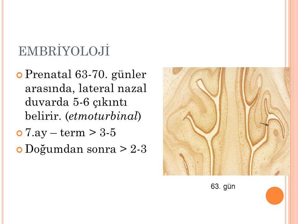 EMBRİYOLOJİ Prenatal 63-70. günler arasında, lateral nazal duvarda 5-6 çıkıntı belirir. (etmoturbinal)