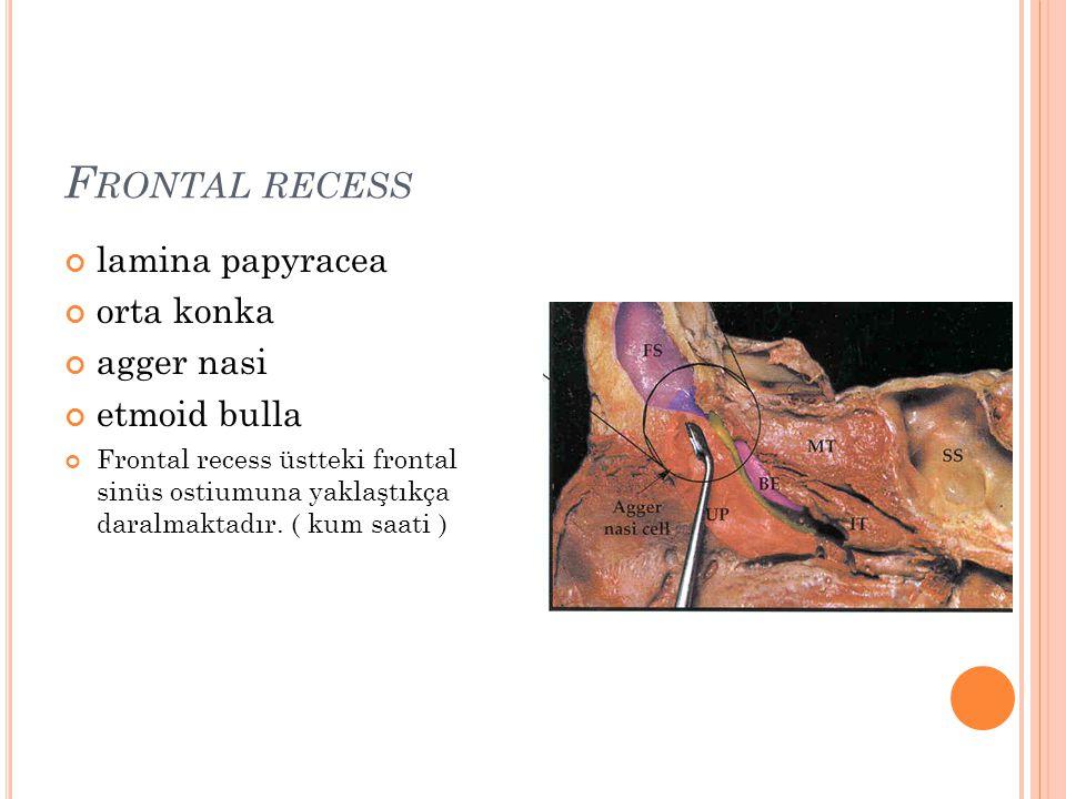 Frontal recess lamina papyracea orta konka agger nasi etmoid bulla