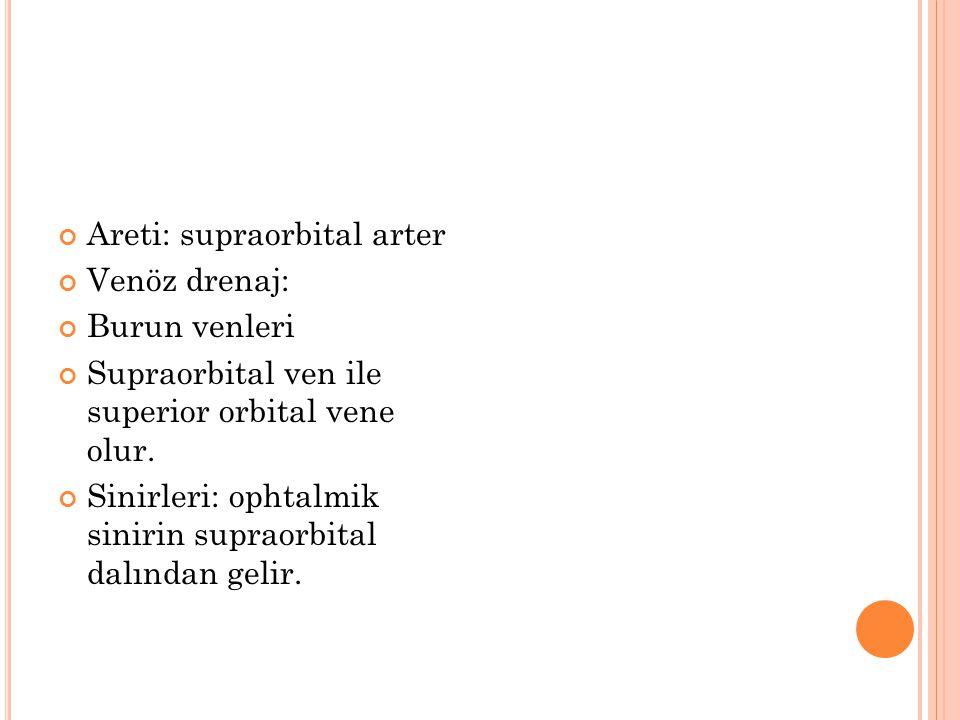 Areti: supraorbital arter