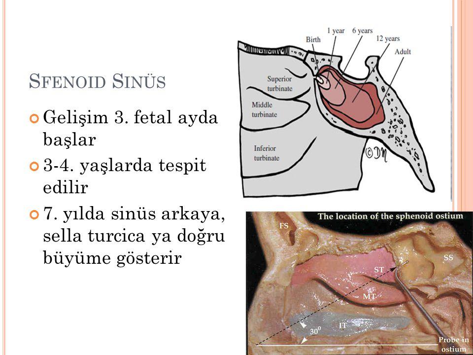 Sfenoid Sinüs Gelişim 3. fetal ayda başlar 3-4. yaşlarda tespit edilir