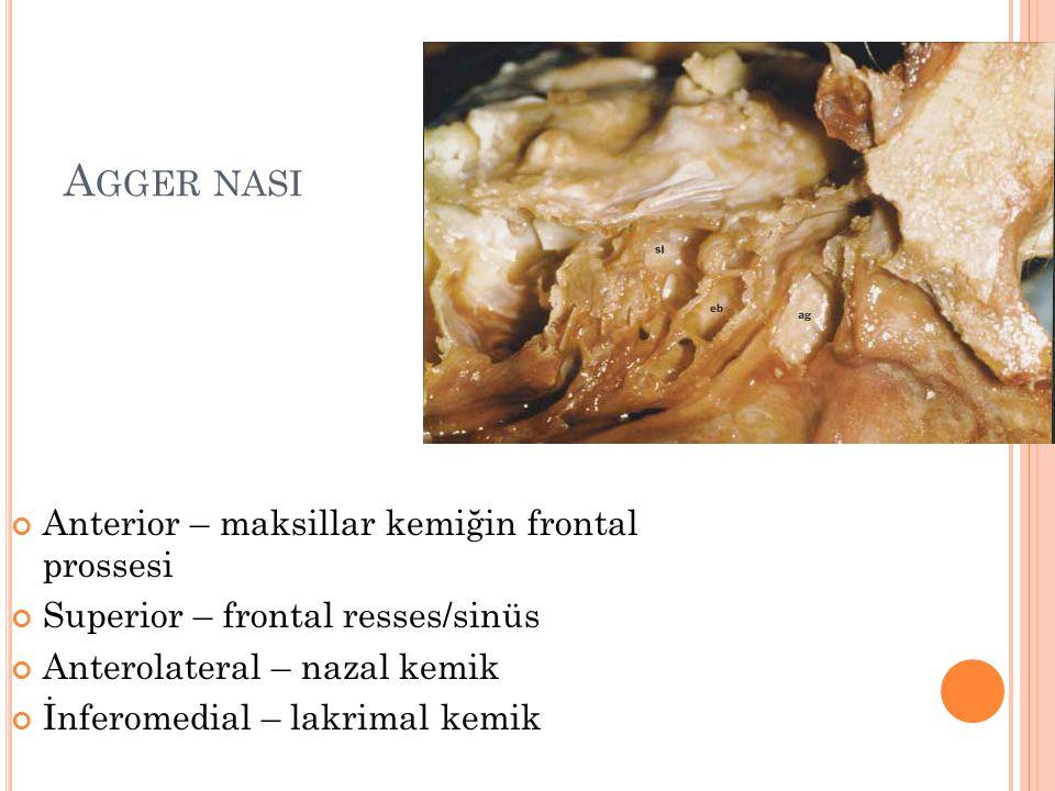 Agger nasi Anterior – maksillar kemiğin frontal prossesi