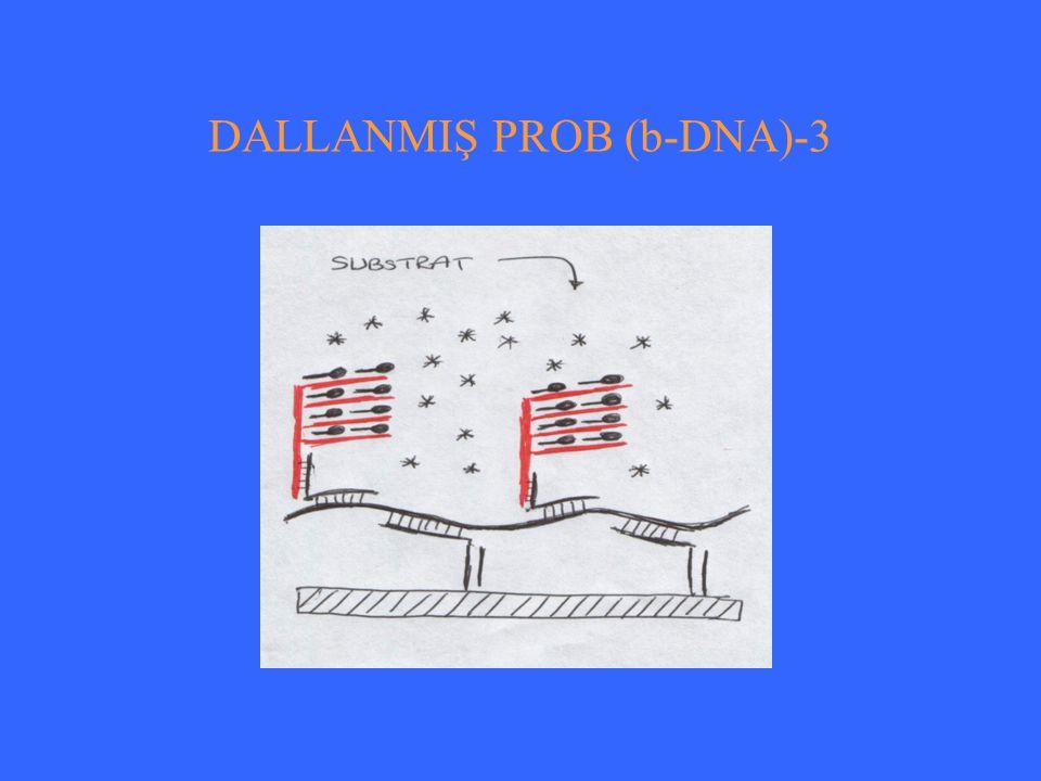 DALLANMIŞ PROB (b-DNA)-3