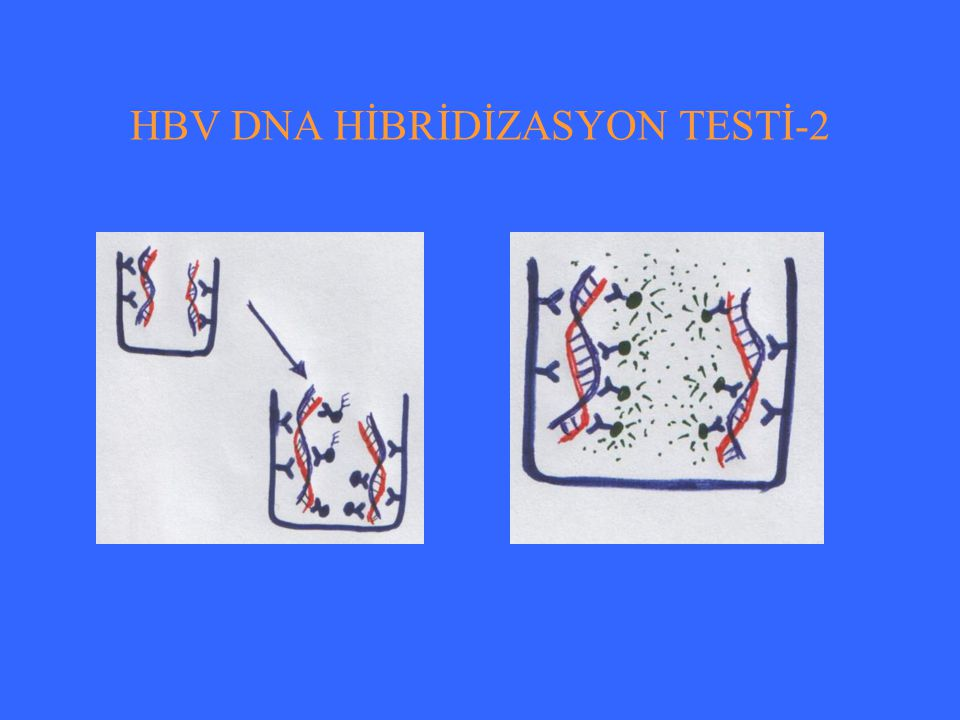 HBV DNA HİBRİDİZASYON TESTİ-2