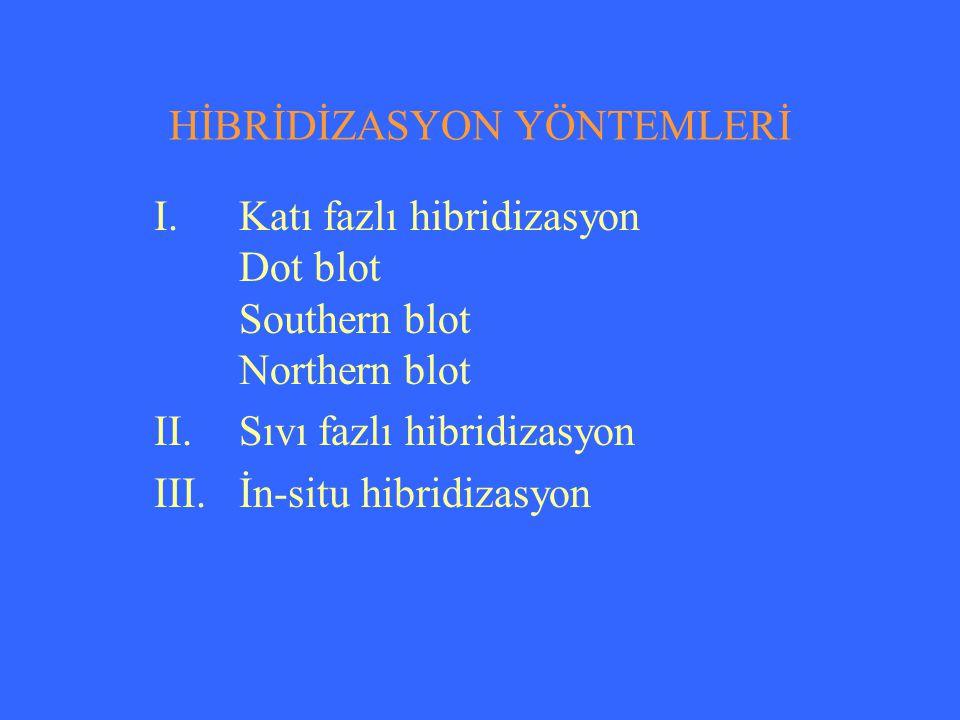 HİBRİDİZASYON YÖNTEMLERİ
