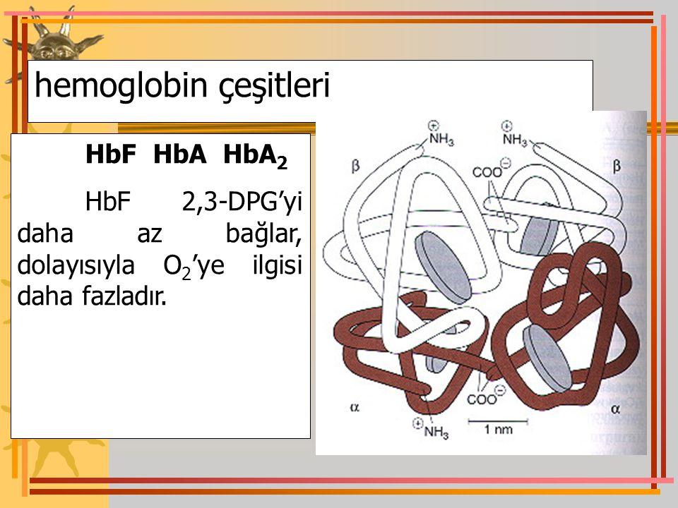 hemoglobin çeşitleri HbF HbA HbA2.