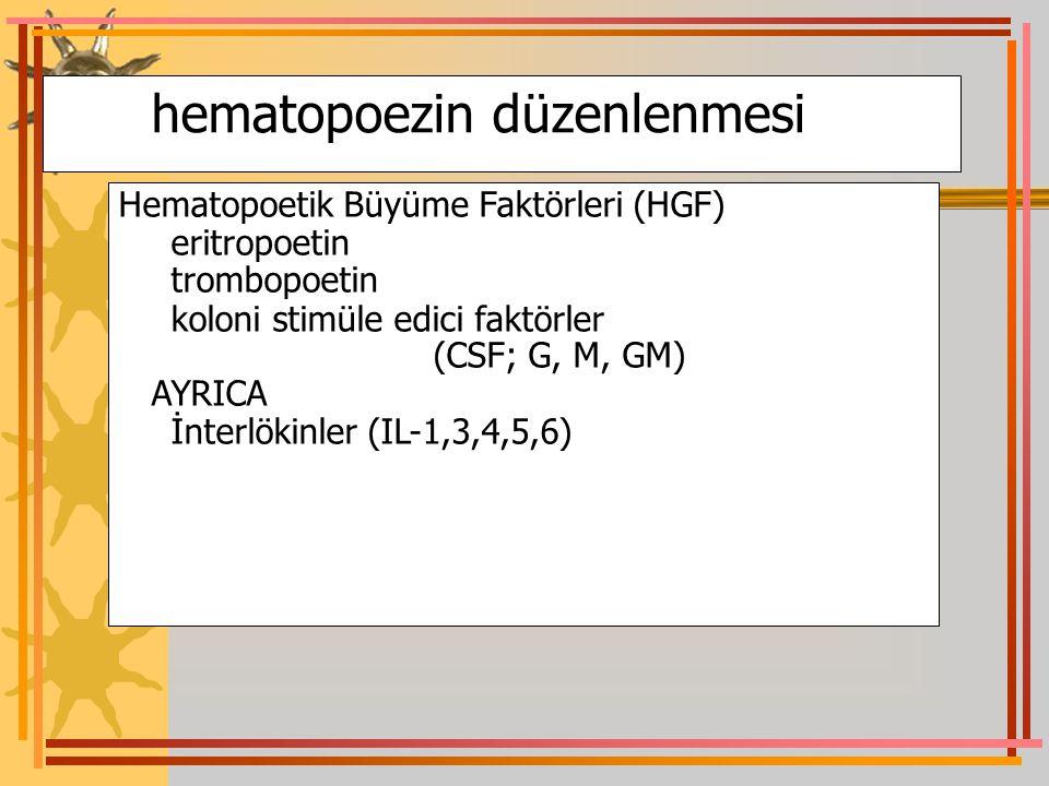 hematopoezin düzenlenmesi