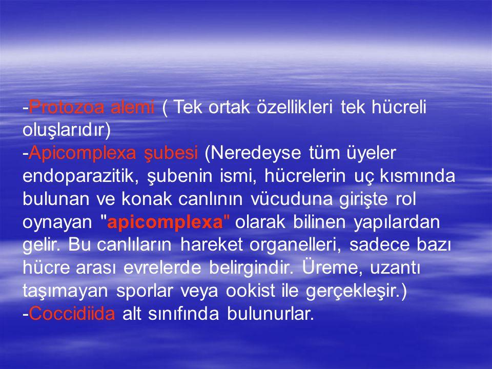 -Protozoa alemi ( Tek ortak özellikleri tek hücreli oluşlarıdır)