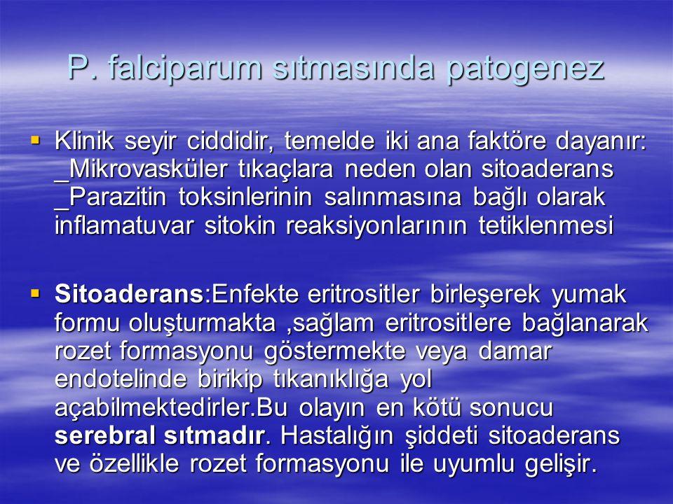 P. falciparum sıtmasında patogenez