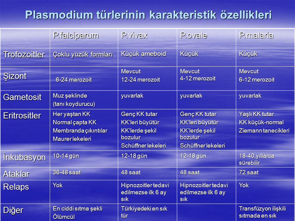 Plasmodium türlerinin karakteristik özellikleri