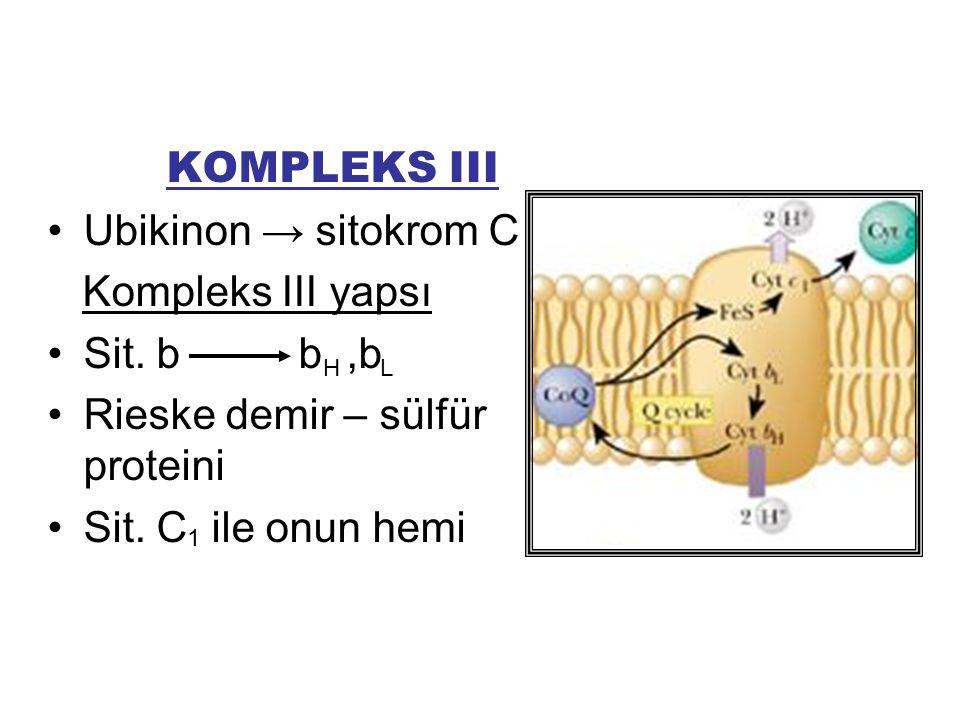 Rieske demir – sülfür proteini Sit. C ile onun hemi
