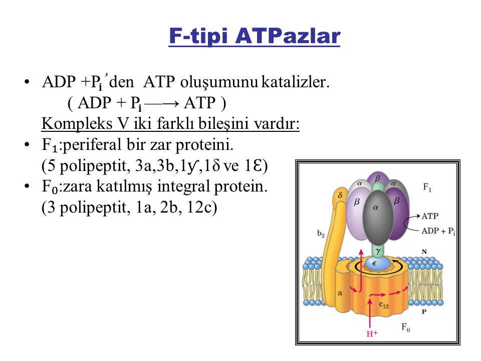F-tipi ATPazlar ADP +P ُ den ATP oluşumunu katalizler.