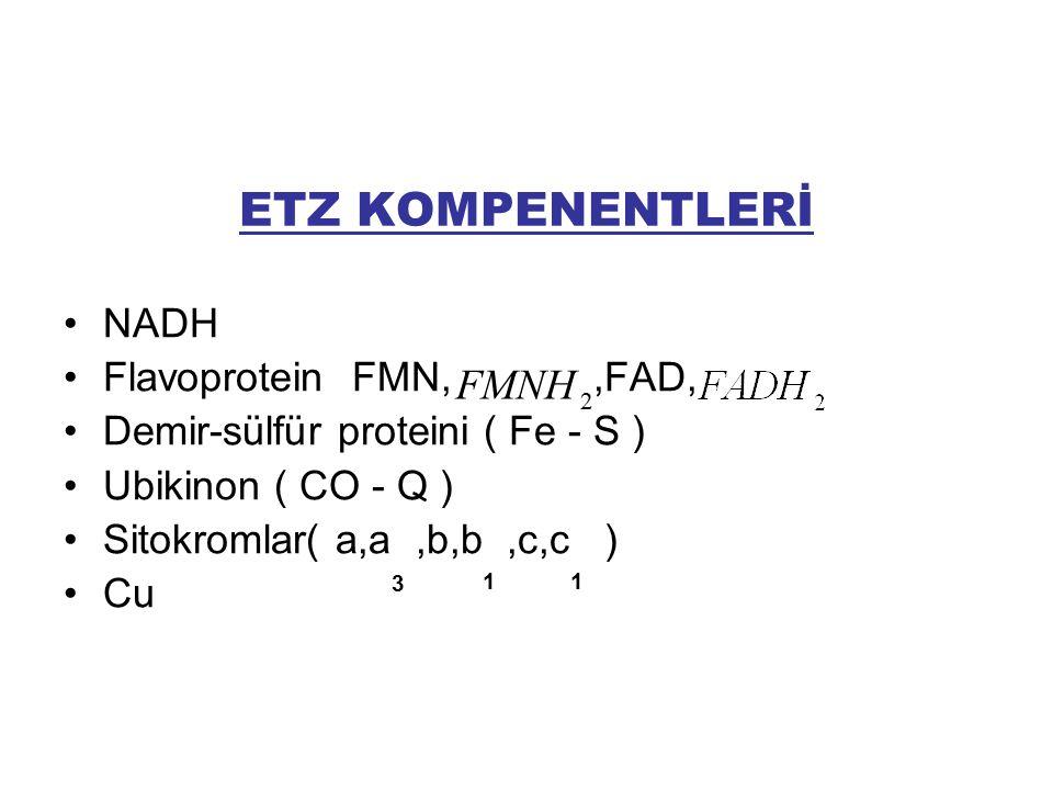 ETZ KOMPENENTLERİ FMNH NADH Flavoprotein FMN,FMNH2,FAD,