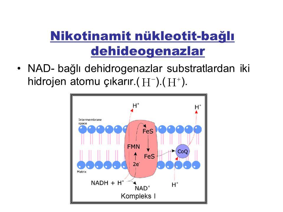 Nikotinamit nükleotit-bağlı dehideogenazlar