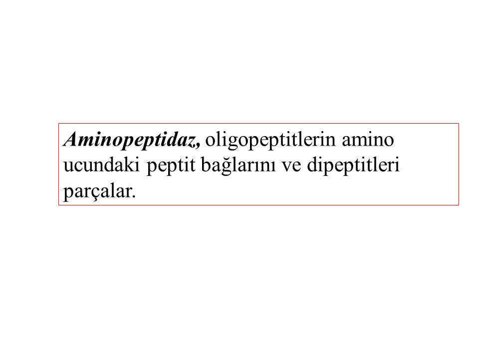 Aminopeptidaz, oligopeptitlerin amino ucundaki peptit bağlarını ve dipeptitleri parçalar.
