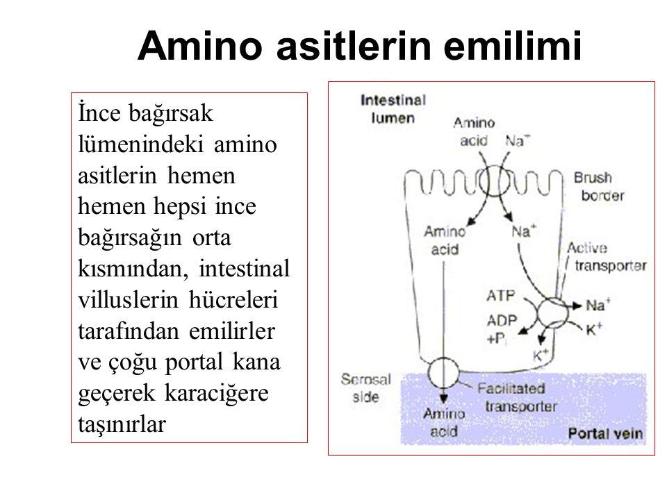 Amino asitlerin emilimi